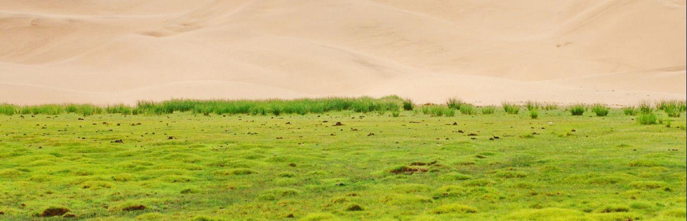 Dunes de Khongoriin Els dans le désert de Gobi